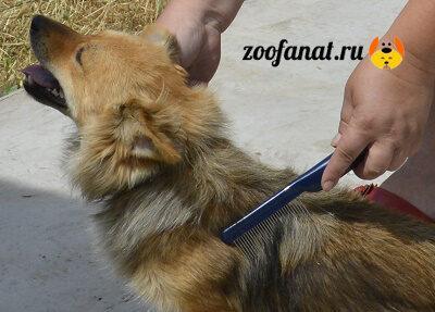 Причесываем собаку расческой с редкими зубчиками