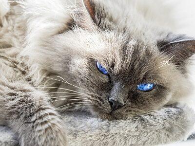Удивительно красивый цвет глаз