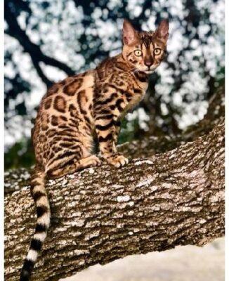 Правда похож на леопарда?
