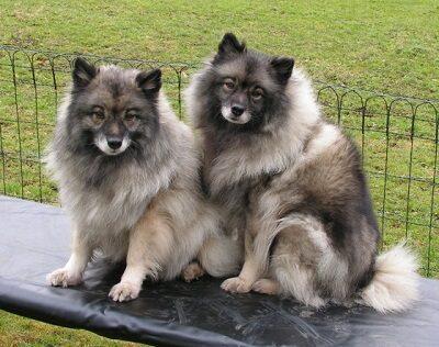 Джина и Джесси
