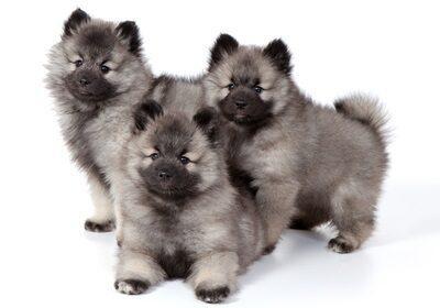 Очаровательные щенки