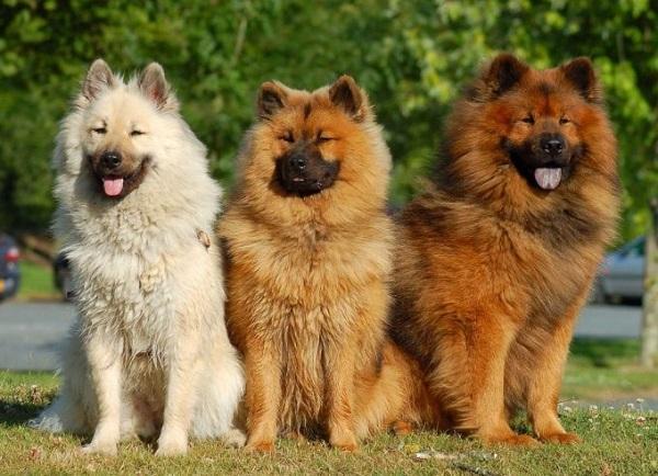Он прекрасно уживается с другими собаками