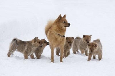 Самка с щенками