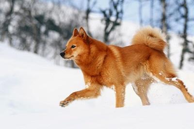 Он прекрасно себя чувствует зимой на снегу