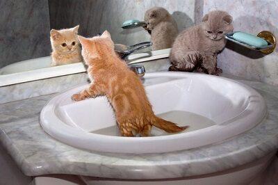 Котята купаются в раковине