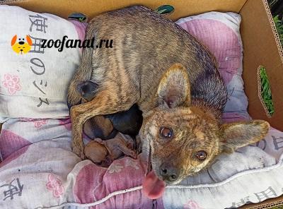 Собака Машка накормила своих новорожденных щенков