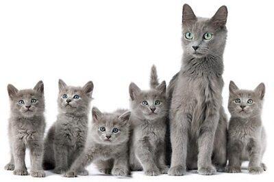 Мама кошка со своими котятами