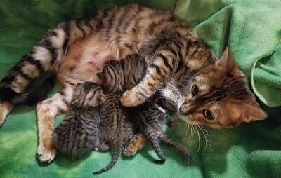 Заботливая мама с котятами