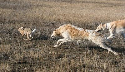 Охота - ее главное предназначение
