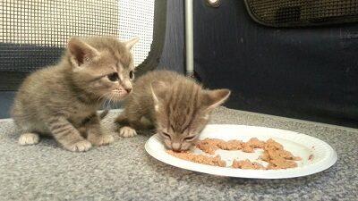 Котенок ест самостоятельно