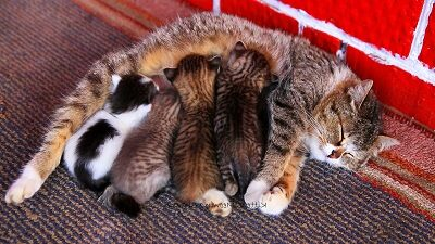 Кошка кормит своих котят