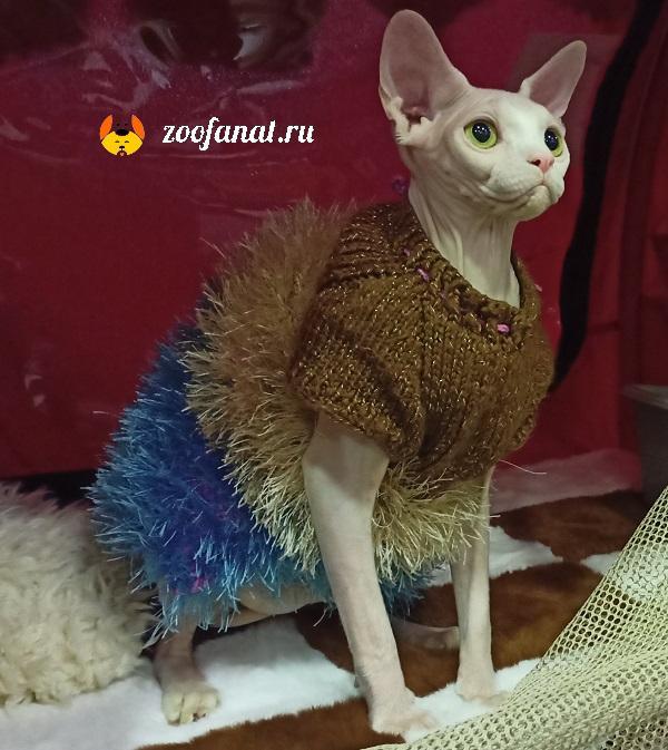 Молодая кошка на выставке