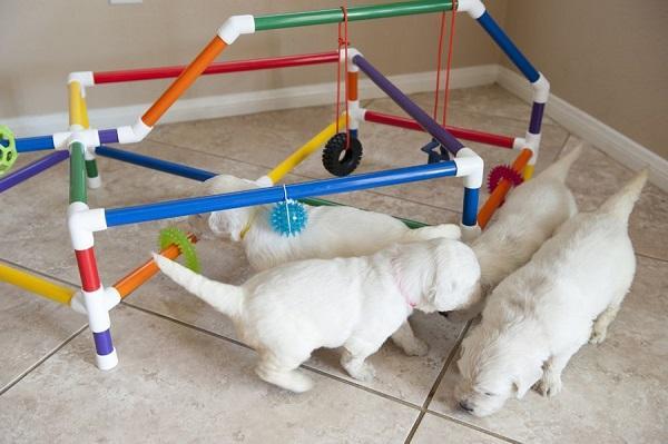 Специальная игровая конструкция для щенков