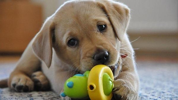 Все малыши любят игрушки