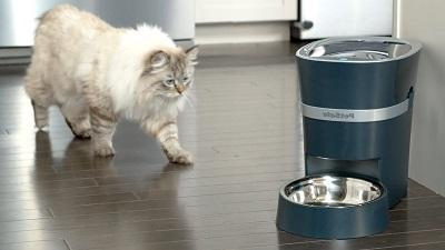 Для крупных пород кошек