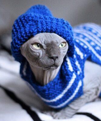 Свитер обязателен зимой