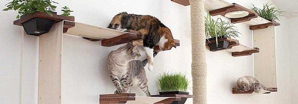 Две кошки лучше чем одна