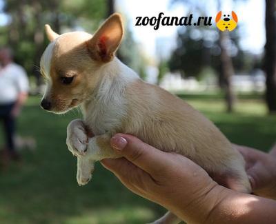 Малышка Люська