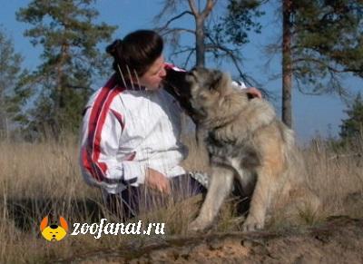 Любовь и взаимопонимание. Арина и ее хозяйка Ольга