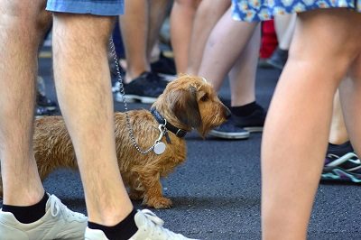 Как лучше делать прогулки с собакой , как отучить тянуть поводок, чем обработать лапы и какая амуниция потребуется