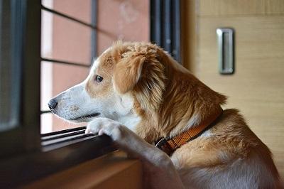 С собакой нужно вовремя гулять