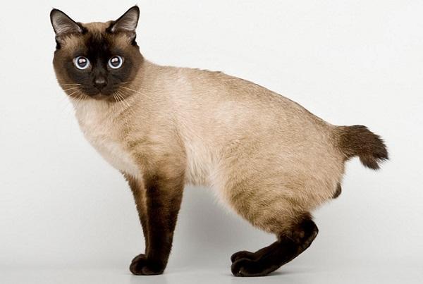 Великолепный кот