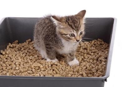 Наполнитель для маленьких котят