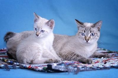 Кошка мама с котенком