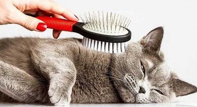Многие кошки любят причесываться
