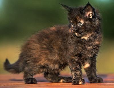 Трехмесячный котенок